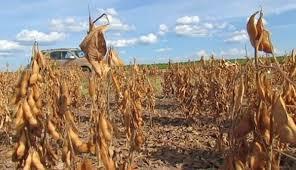 Sicoob prorroga divida de credito rural em função da seca